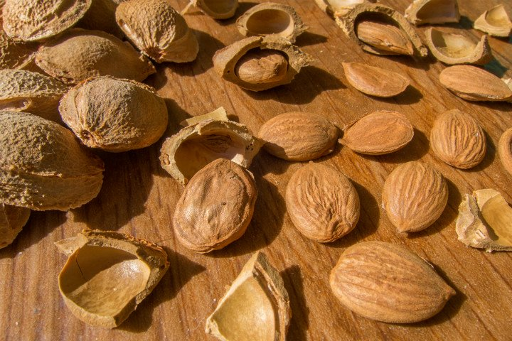 Benefits of Apricot Seeds