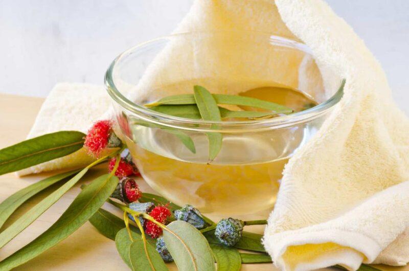Eucalyptus winter tea recipe