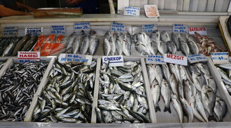 What fish are eaten in November