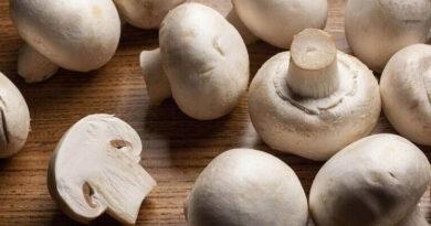 How to Boil Mushrooms ? Edible Mushroom Species (1)